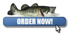 Order Bass Fishing 101